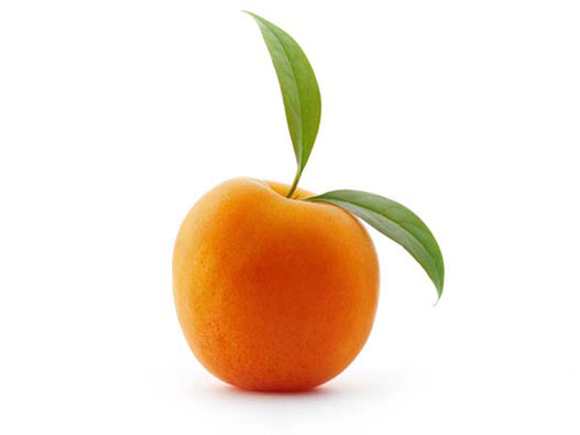 Buy Central Otago Apricots Online directly from Orchard
